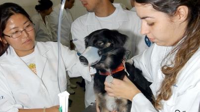 Proteção Animal promove agendamento para castração no Cabuçu