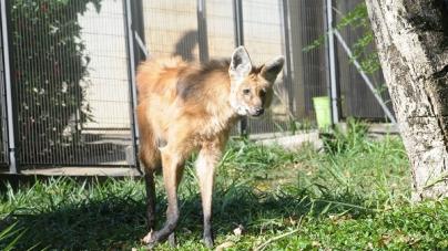 Zoo de Guarulhos devolveu mais de 680 animais à natureza