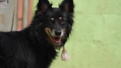 Disque-denúncia contra maus-tratos de animais domésticos será lançado em SP