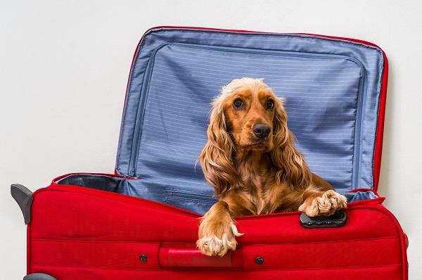 Abandono de animais aumenta no período das férias