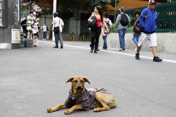 Pesquisa aponta que vira-lata é maioria em lares brasileiros