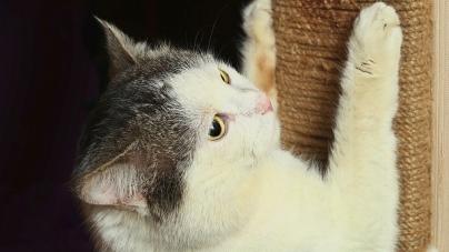 Saiba como evitar acidentes com animais de estimação
