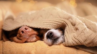 Prós e contras de dormir na mesma cama que o pet