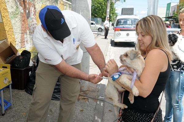 Calendário e importância das principais vacinas para cachorro