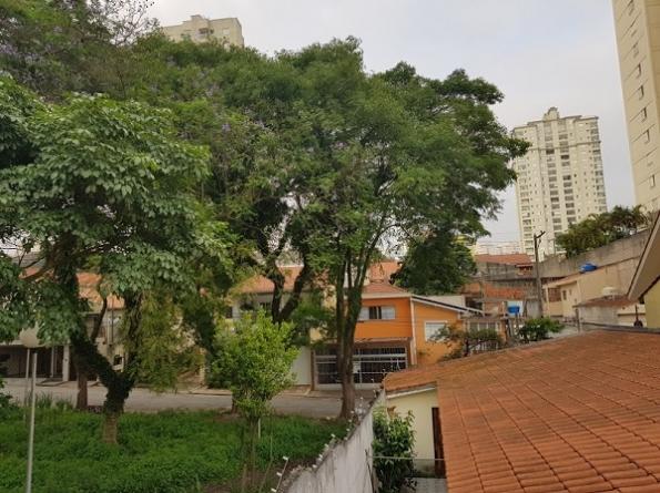 Morador da Vila Augusta teme que árvores caiam em sua residência desde 2016