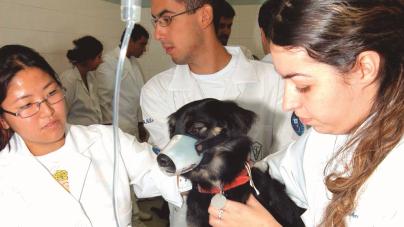 Prefeitura disponibilizará agendamentos para castração animal pela internet a partir do ano que vem