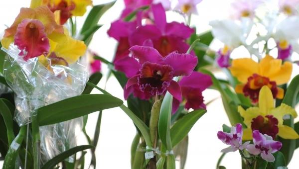 Trilhas e oficinas de orquídeas estão na programação de dezembro no Bosque Maia