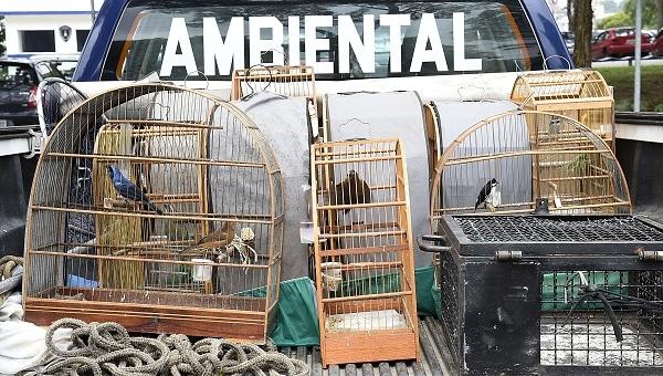 Patrulhamento Ambiental da GCM resgata pássaros no Ponte Alta