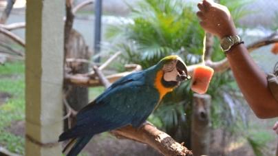 Animais do Zoo de Guarulhos recebem picolés para amenizar o calor
