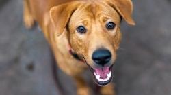 Shopping Bonsucesso promove feira de adoção de animais neste domingo
