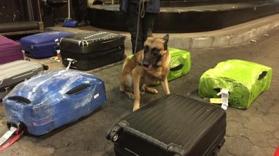 Receita Federal apreende mais de 11 kg de cocaína no aeroporto de Guarulhos