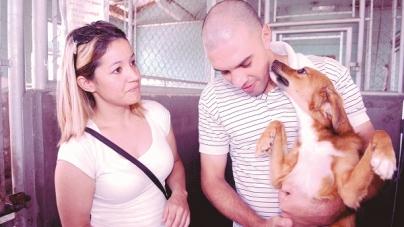 Shopping de Guarulhos promove feira de adoção de animais no próximo domingo