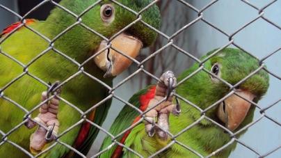 Clínica Madagascar promove encontro de animais exóticos