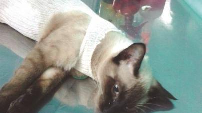 ONG Mi&Au realiza castração de animais com preços reduzidos