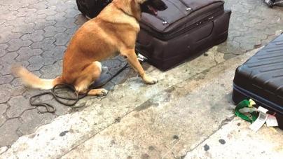 Cães da Receita acham cocaína em 287 pares de sapatos no aeroporto