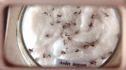 Bloco de rua da Saúde destaca o combate ao Aedes Aegypti