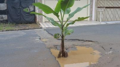 Bonsucesso acumula mais de 300 buracos, diz morador que plantou bananeiras