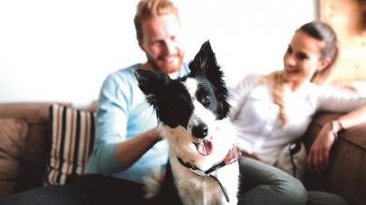 Pets estão entre as principais causas de brigas entre moradores de condomínios