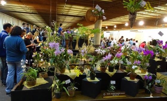 Maior Exposição de Orquídeas de São Paulo chega a sua 100ª edição