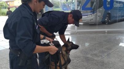 GCM treina cães para encontrar pessoas desaparecidas