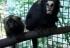 Zoológico de Guarulhos inaugura novo recinto de saguis ameaçados de extinção