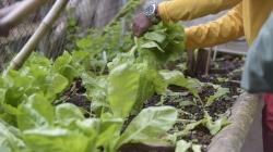 Inscrições abertas para oficina gratuita de horta em pequenos espaços