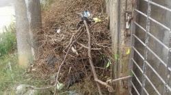 Mato alto e excesso de lixo atraem insetos para o Jardim Diogo