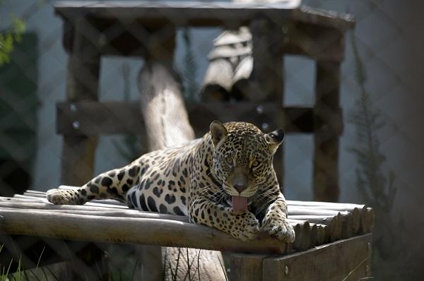 Zoo de Guarulhos é um dos poucos do país a obter a certificação de bem-estar animal