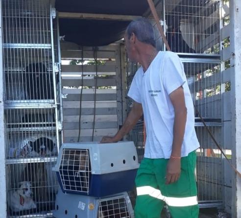 Prefeitura realiza ação especial de castração gratuita de cães e gatos