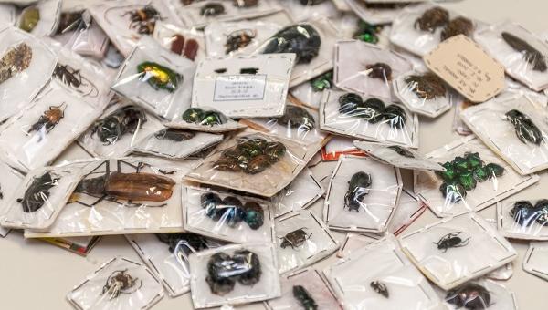 Ibama apreende 482 insetos no Aeroporto de Cumbica