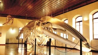 Museu de Pesca é opção de lazer e conhecimento