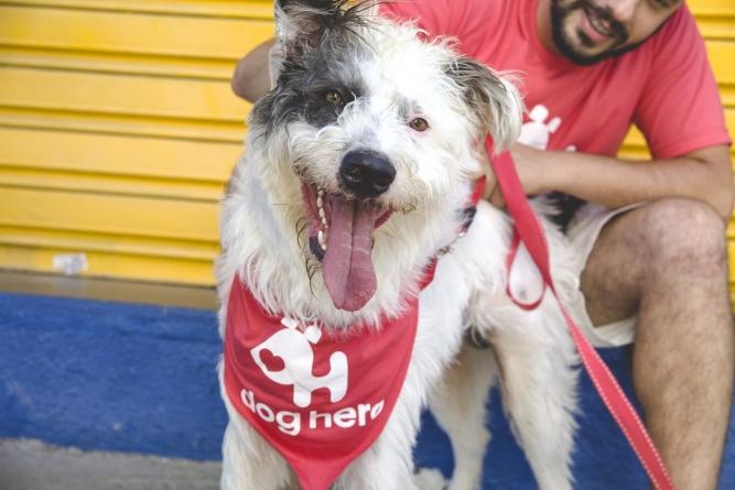 Confira lugares para passear com os pets em São Paulo
