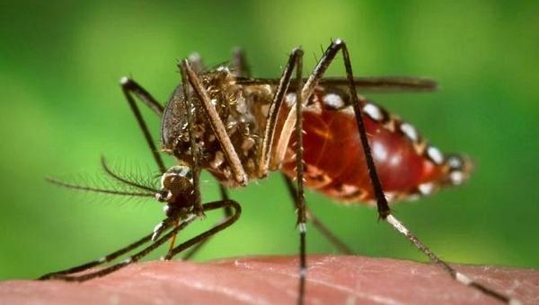 Casos de dengue já ultrapassam dados de 2017 e 2018