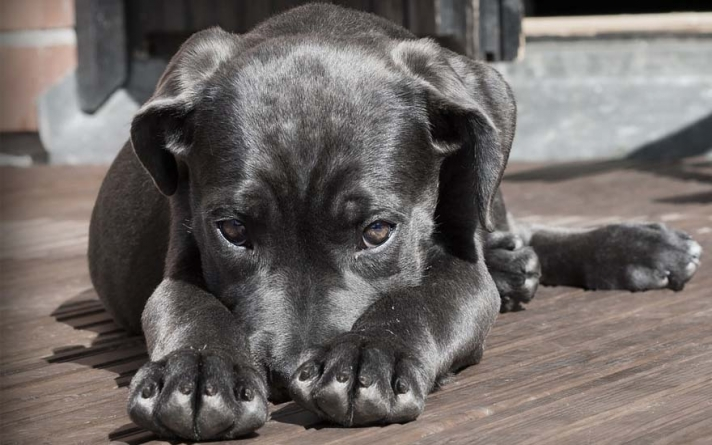 Cães e gatos procuram novos lares em evento de adoção nesse sábado